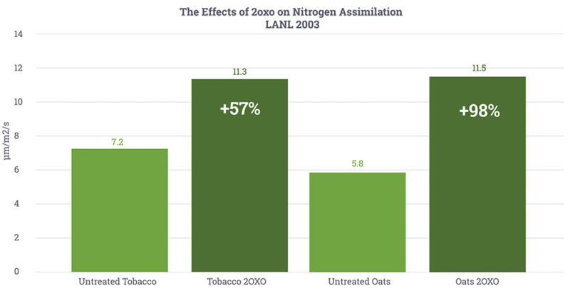 The Effects of 2oxo on Nitrogen Assimilation