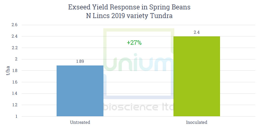 Exseed Yield Response in Spring Beans N Lincs 2019 variety Tundra