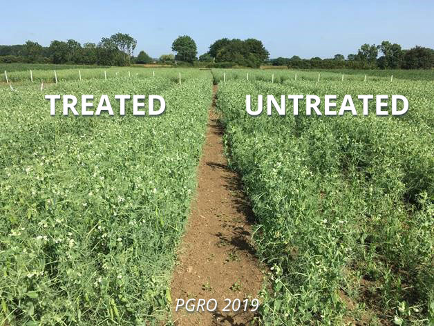 Exseed Peas Treated Vs Untreated