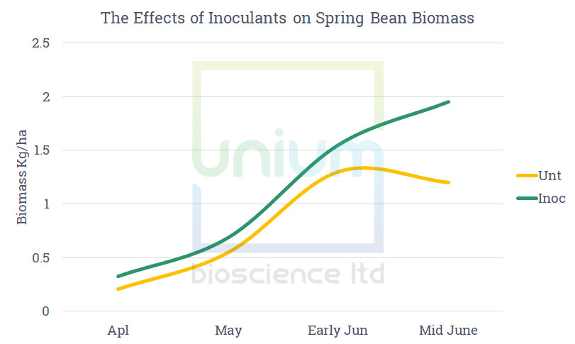 The Effects of Inoculants on Spring Bean Biomass