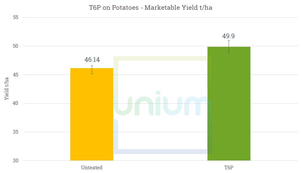 T6P on Potatoes - Marketable Yield t/ha