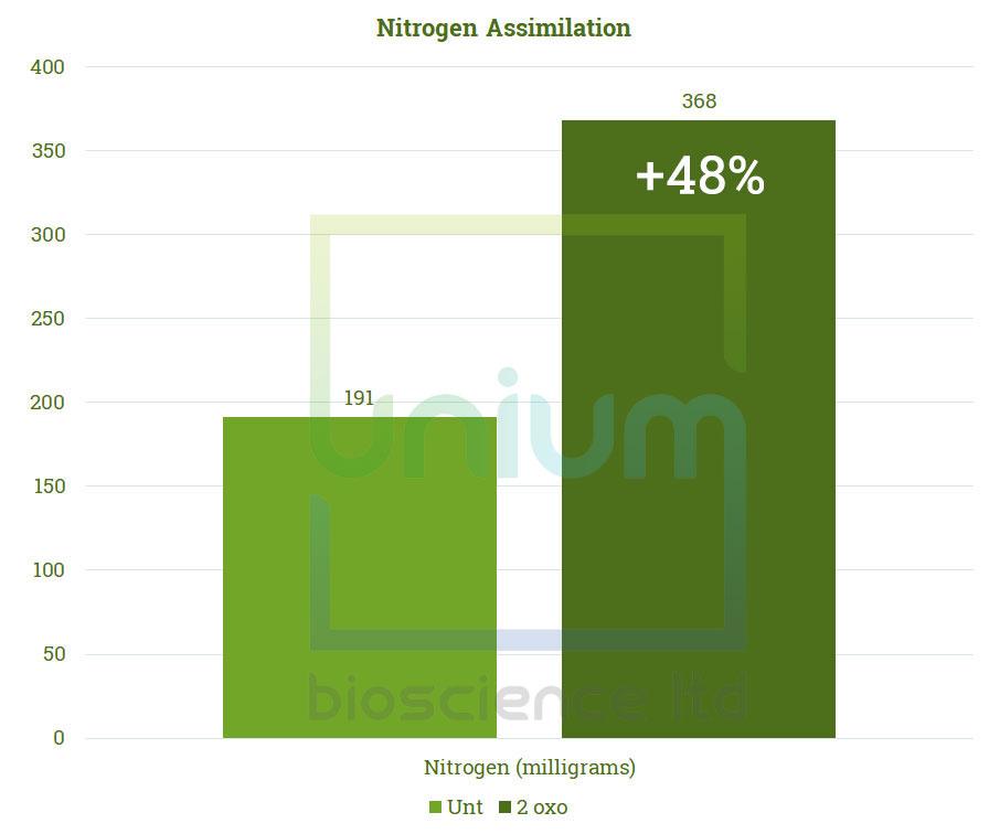 TWOXO Nitrogen Assimilation2