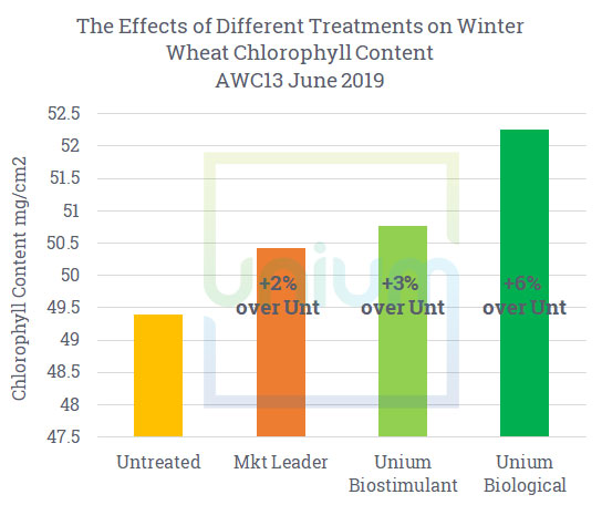 The Effects of Different Treatments on Winter Wheat Chlorophyll Content AWC13 June 2019
