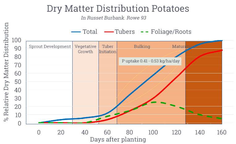 Dry Matter Distribution Potatoes