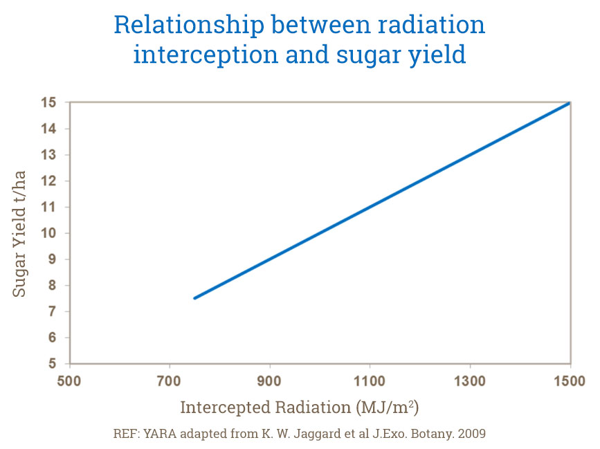 Relationship between radiation interception and sugar yield