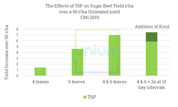 The Effects of T6P on Sugar Beet Yield t/ha over a 56 t/ha Untreated yield CMi 2019