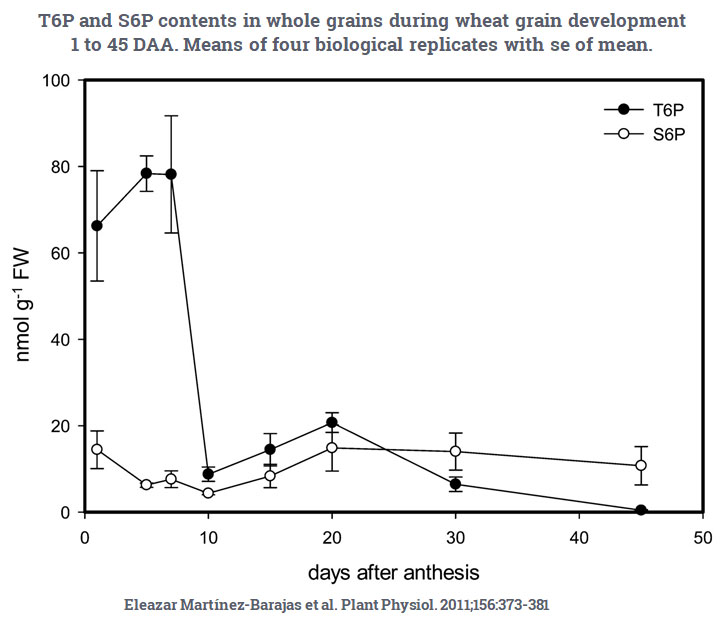 T6P and S6P contents in whole grains during wheat grain development 1 to 45 DAA. Means of four biological replicates with se of mean