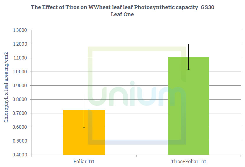 The Effect of Tiros on WWheat leaf leaf Photosynthetic capacity GS30 Leaf One