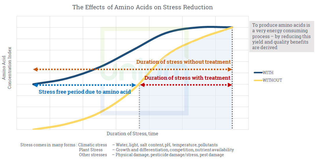 The Effects of Amino Acids on Stress Reduction