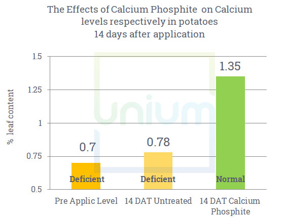 The effect of Wholly on calcium levels respectively in potatoes