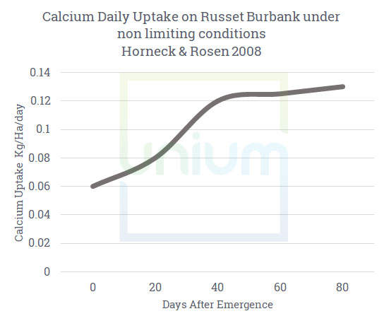 Calcium Daily update on russet burbank under non limiting conditions