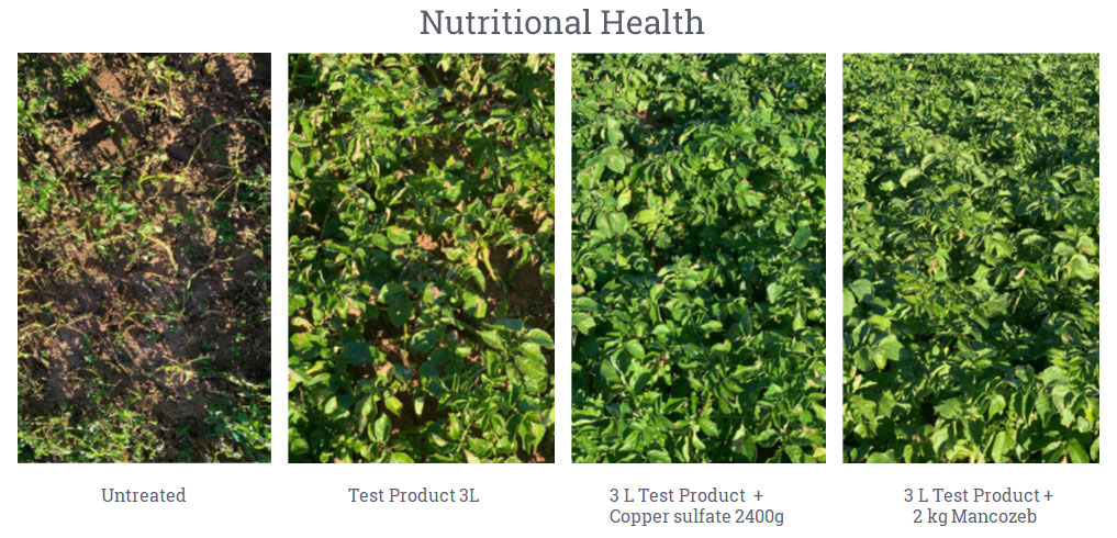 Nutritional health of potatoes