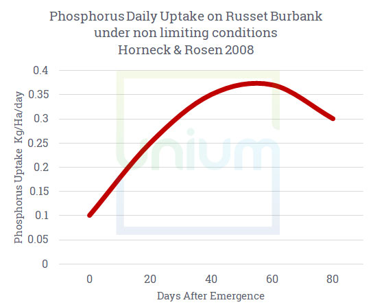 Phosphorus Daily update on russet burbank under non limiting conditions