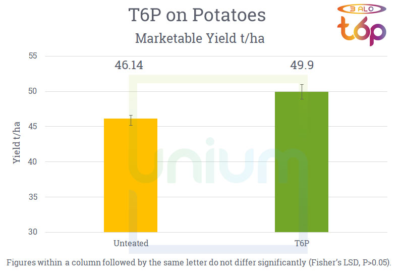 The effect of 3 Alo T6P on potatoes