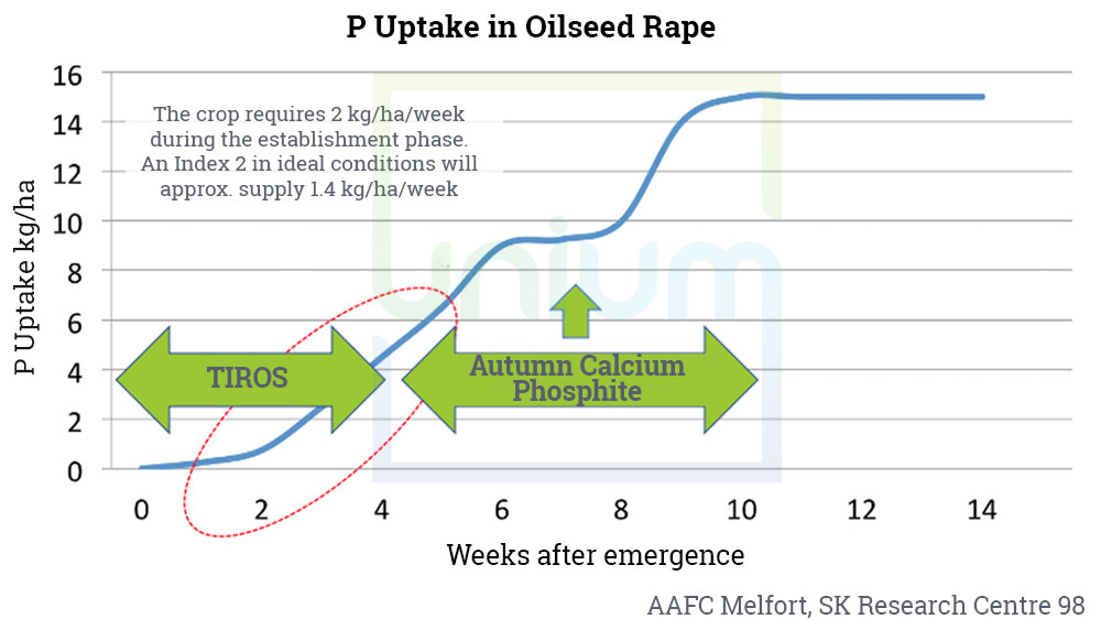 P Uptake in Oilseed Rape