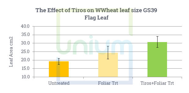 The Effect of Tiros on WWheat leaf size GS39 Flag Leaf