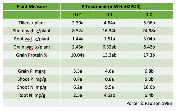 the importance of seed phosphorus content and its metabolism once the seed is planted