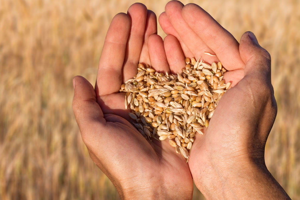Seed choice is one of the most important decisions we have to take, not only the variety but the quality of the seed