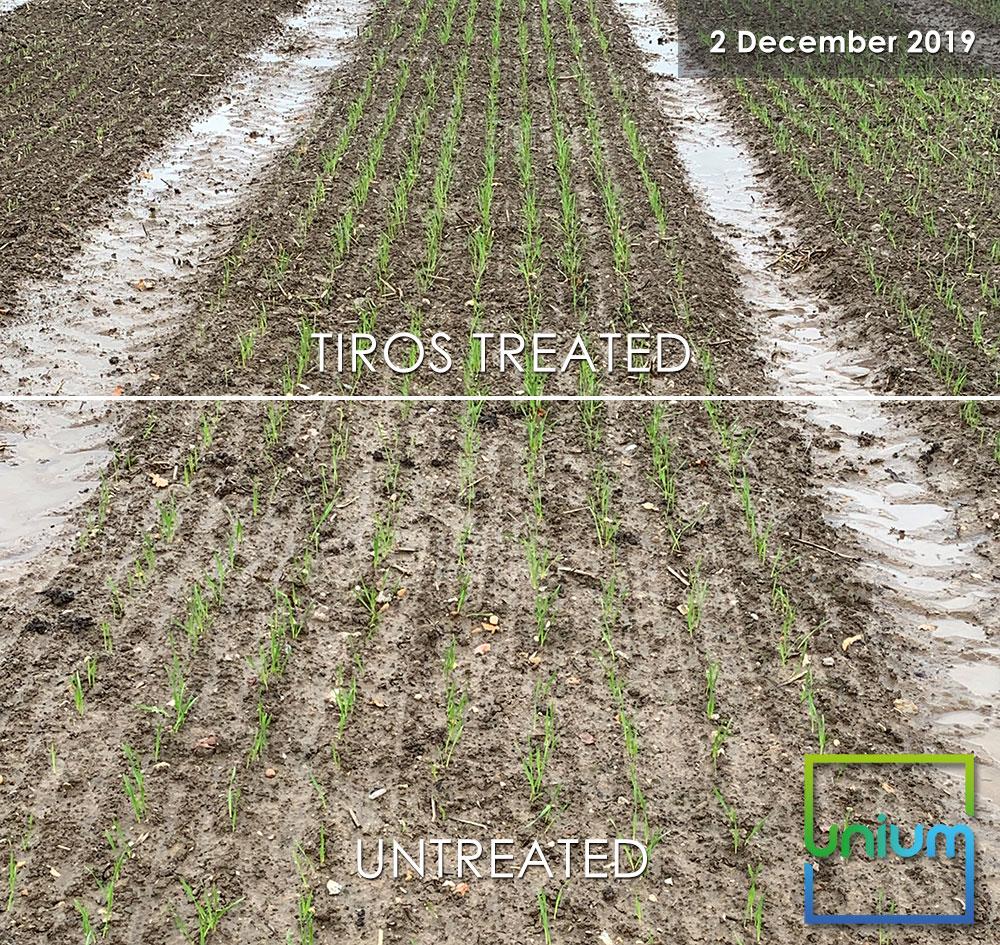 TIROS Treated Vs Untreated December 2019