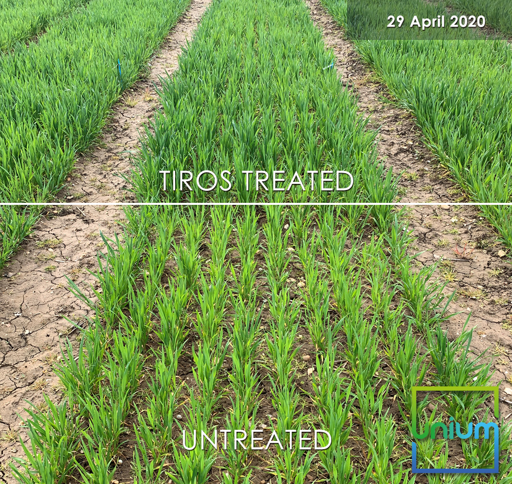 TIROS Treated Vs Untreated April 2020