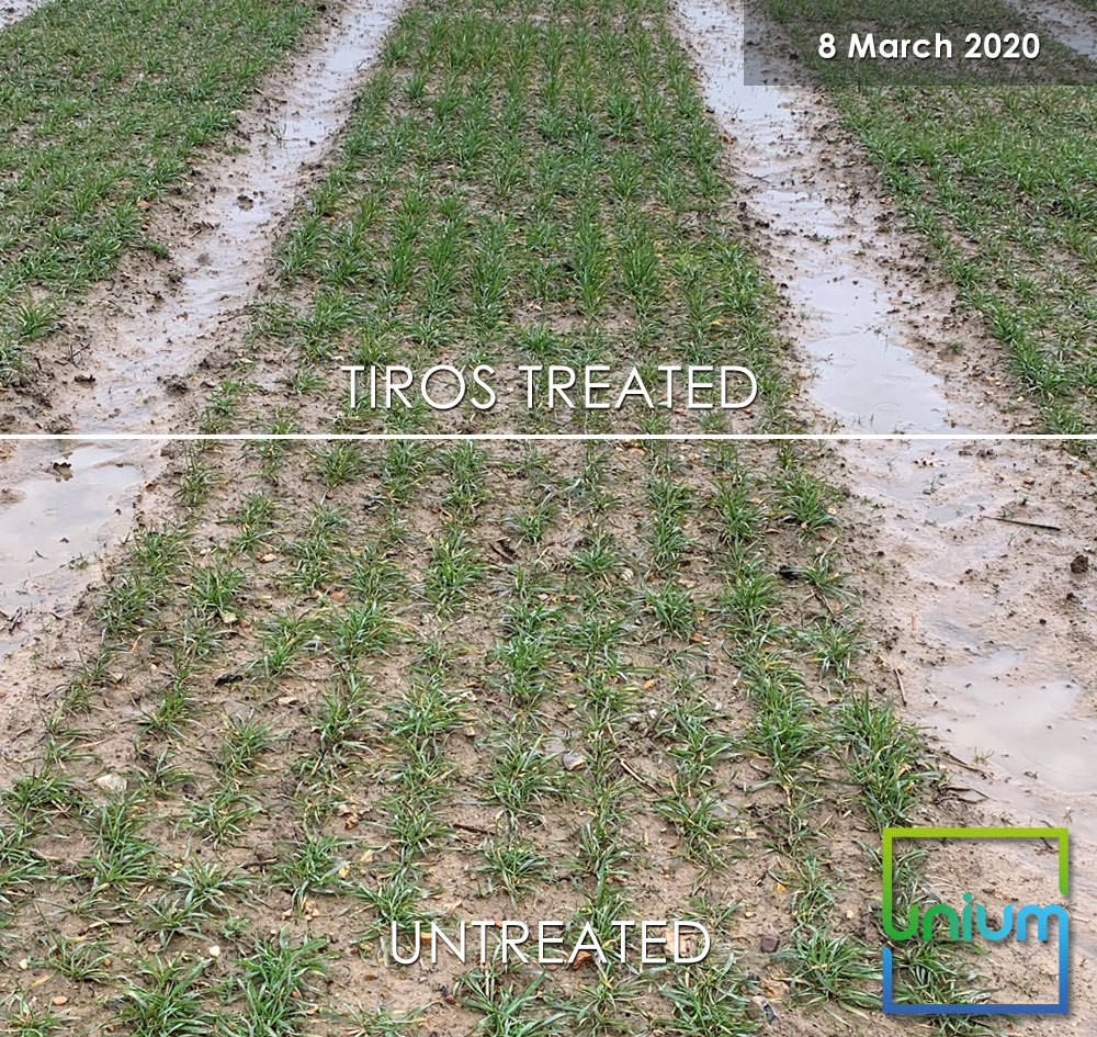 TIROS Treated Vs Untreated March 2020