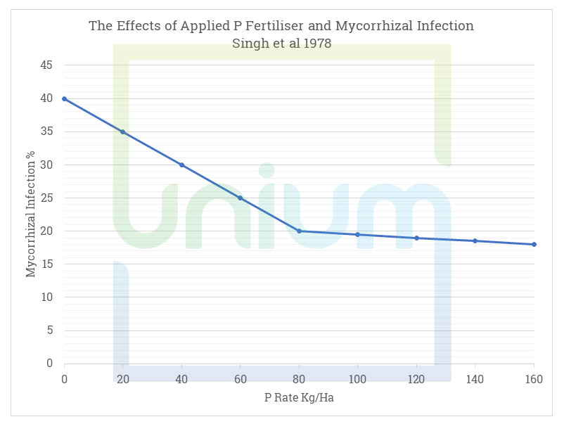 The Effects of Applied P Fertiliser and Mycorrhizal Infection