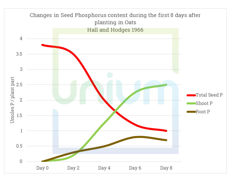 Changes in Seed Phosphorus content during the first 8 days after planting