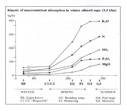 kinetic of macronutrient absorbtion OSR