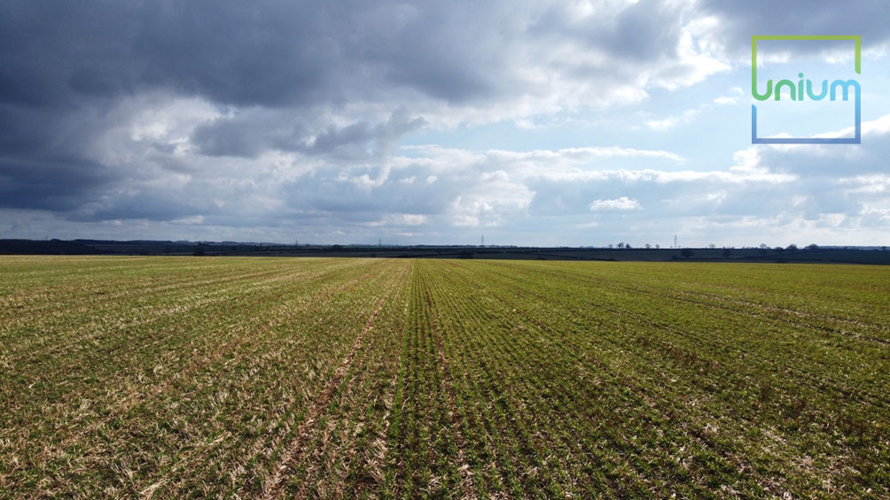 Winter Barley Untreated vs Tiros Treated