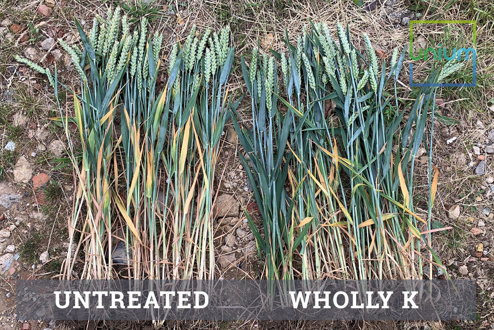 Wholly K Potassium Treated vs Untreated