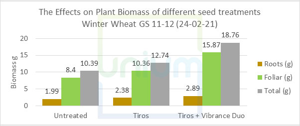 The Effects on Plant Biomass of different seed treatments Winter Wheat GS 11-12