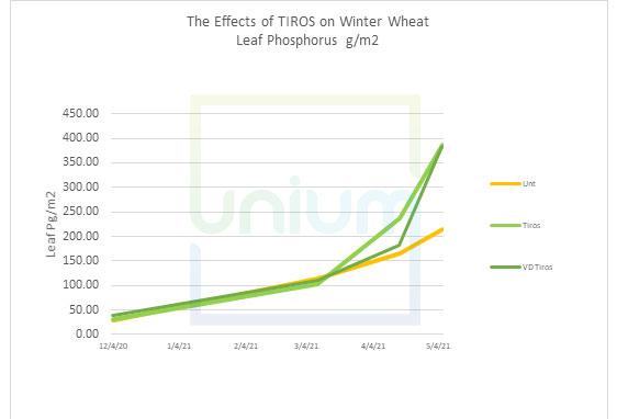 The Effects of TIROS on Winter Wheat Leaf Phosphorus g/m2